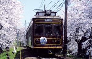 桜のトンネルを走る嵐電